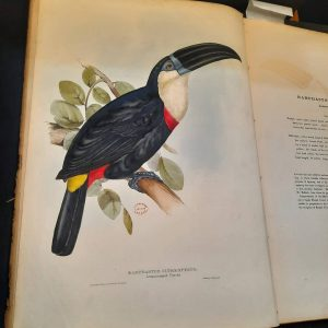 Special Collections, University College London (UCL) Library